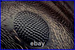 Nikon TU Plan 50x/0.60 ELWD WD11 Microscope Objective. Extreme Macro